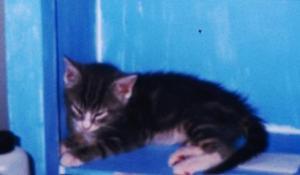 Kitten low res