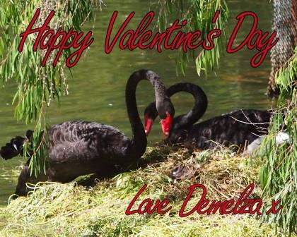 Happy Valentines Day with Black Swan Couple